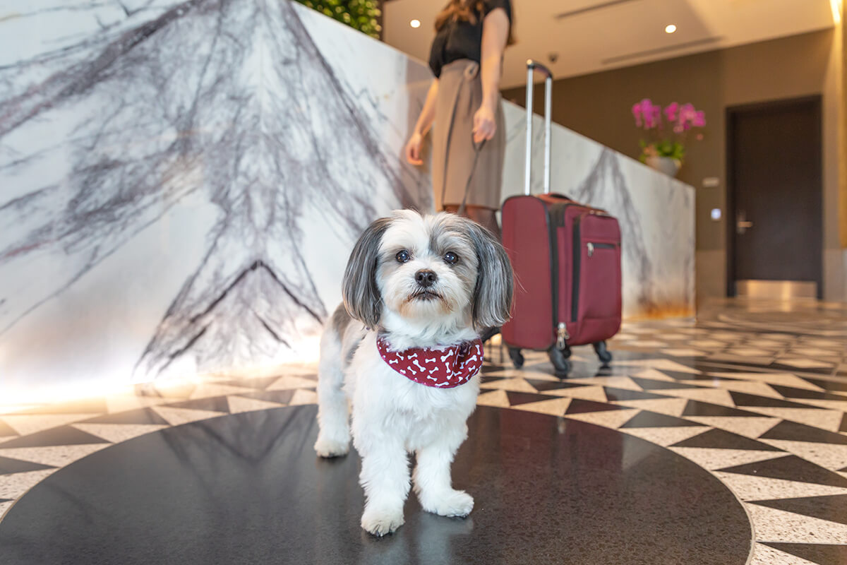 Dog at hotel check-in