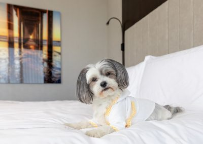 Hotel-X-Toronto-commercial-dog-photographer