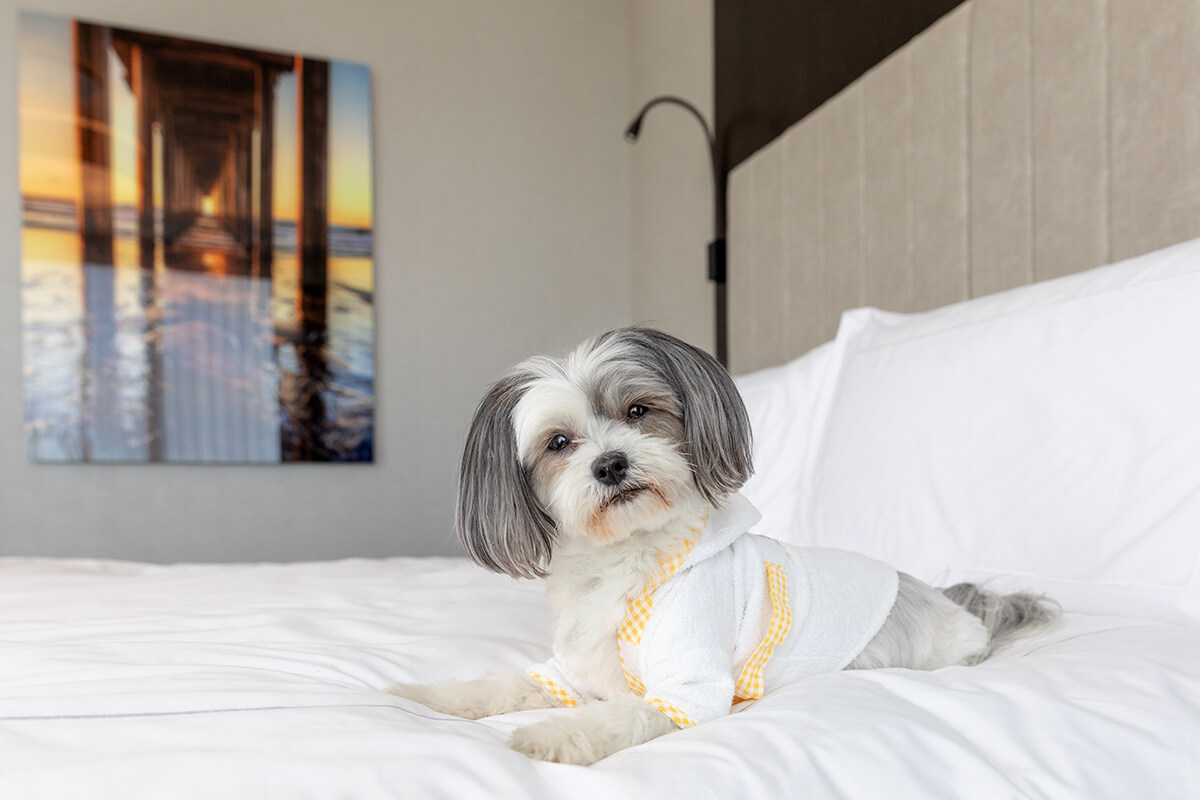 dog on hotel bed