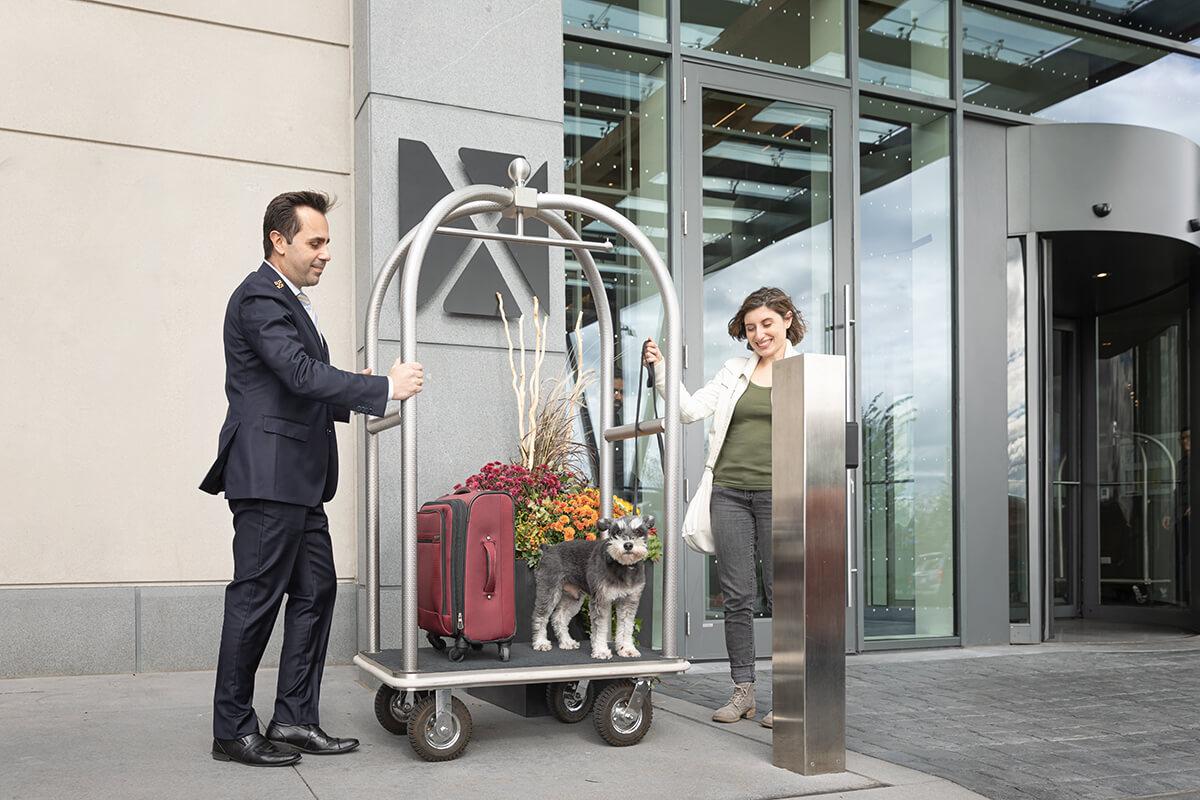 dog on hotel luggage cart
