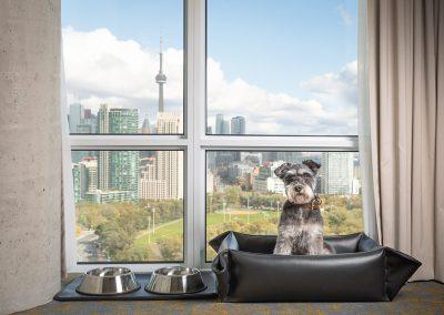 Hotel-X-Toronto-view