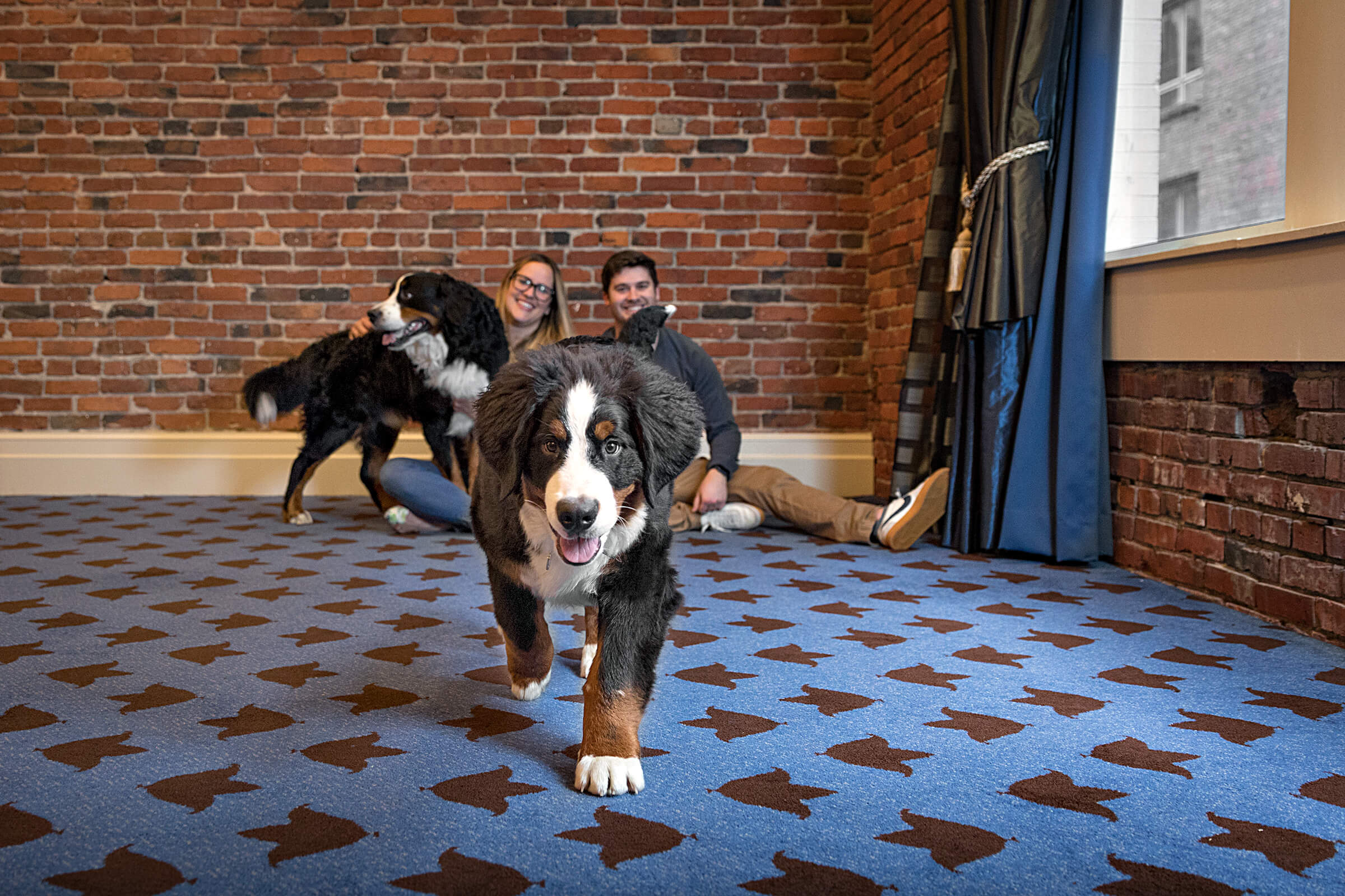 bernese mountain dog in hotel banquet hall