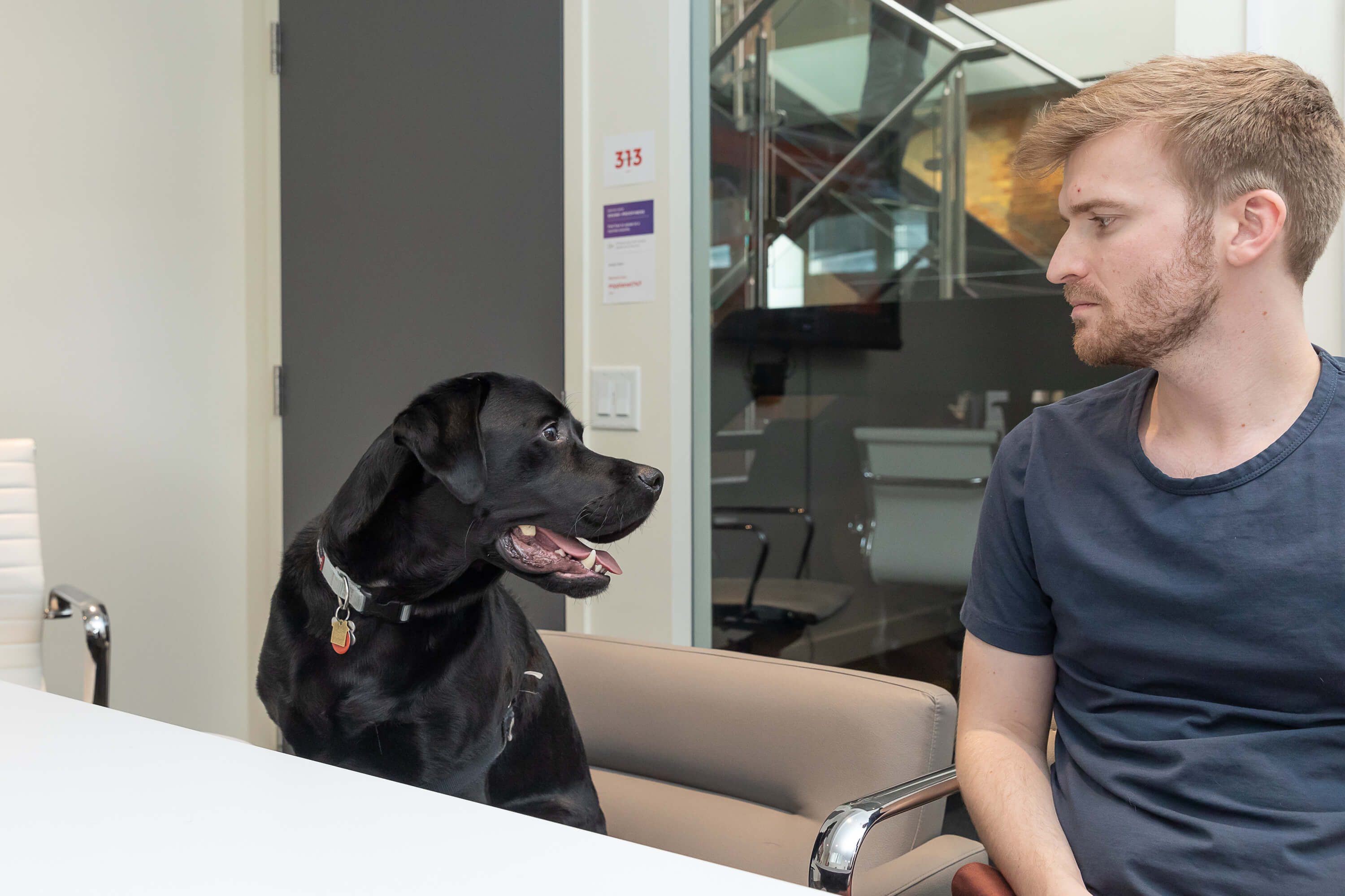 black lab and person in conference room
