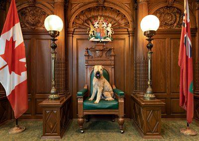 Toronto-courtroom-dog-photographer