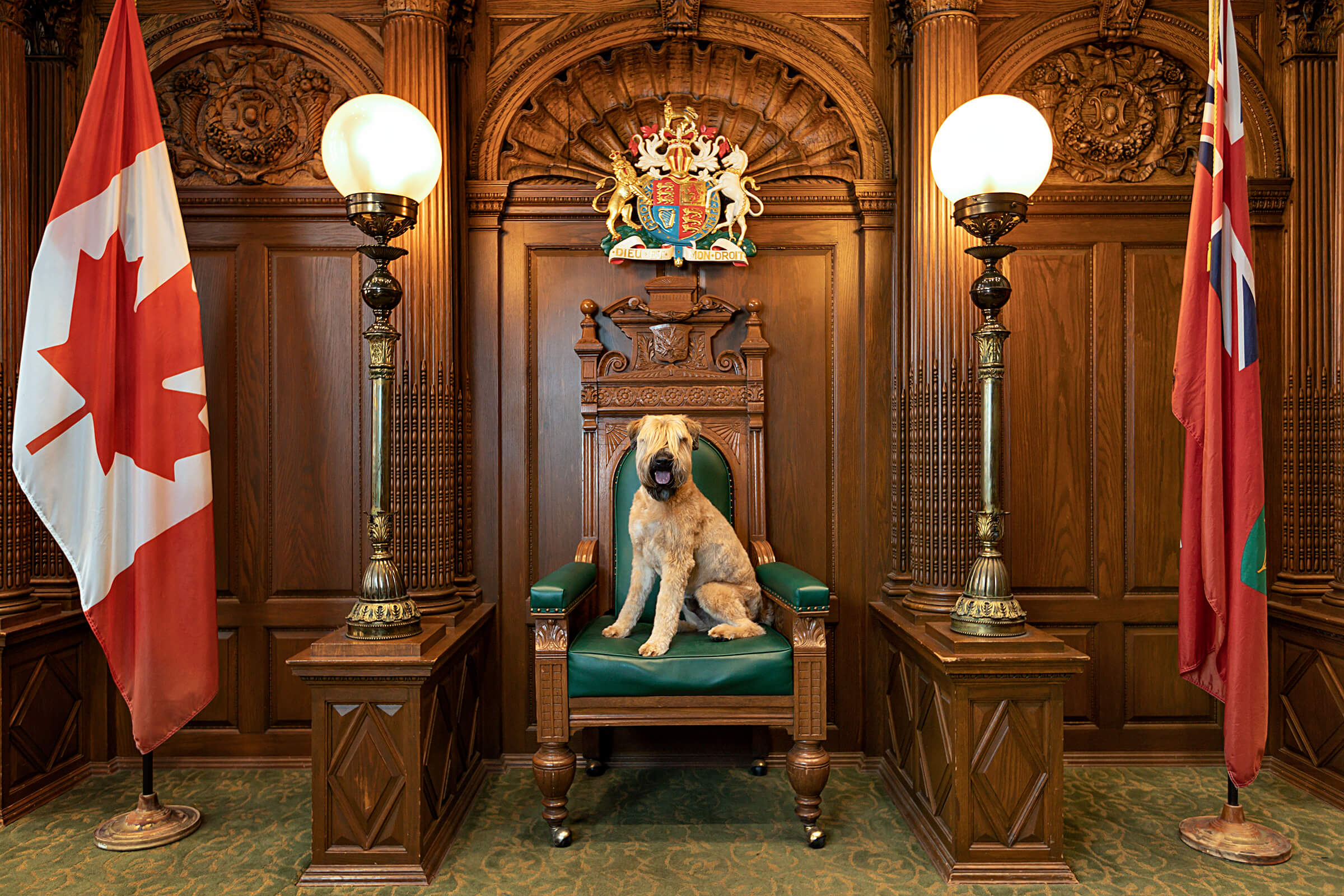 wheaten terrier on judge's dias at Toronto Old City Hall, Courtroom 121