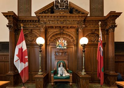 Toronto-courtroom-dog-photography