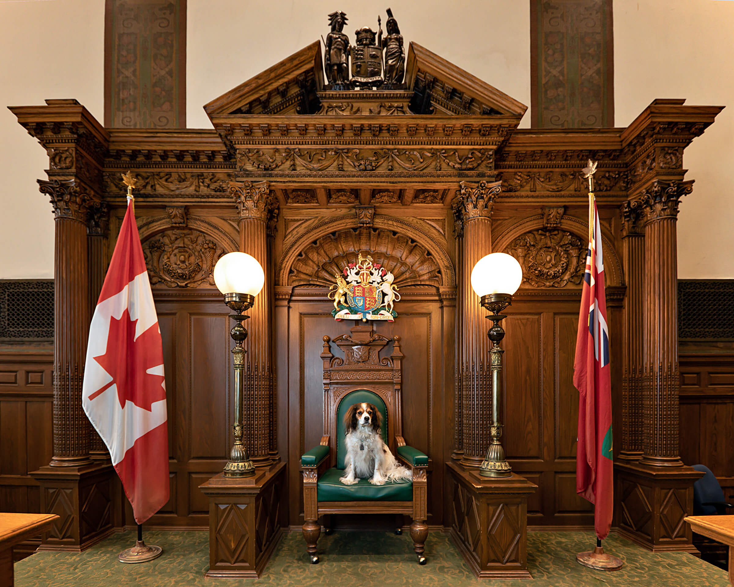 spaniel in Toronto old city hall courtroom 121