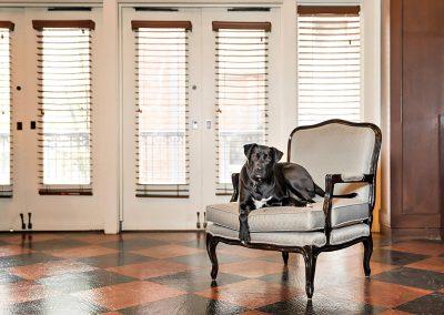 dog-friendly-hotel-photographer