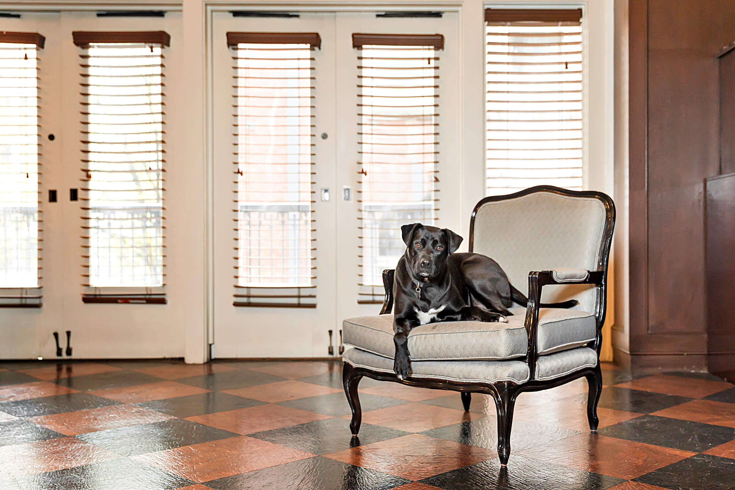 black lab on chair in hotel photography