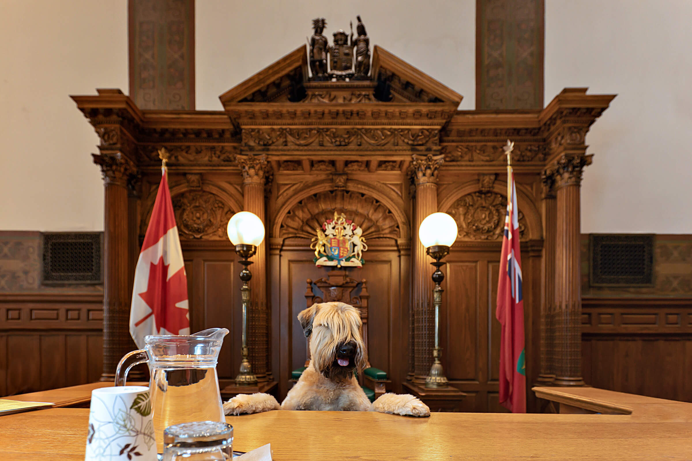 dog as judge at ceremonial courtroom 121 in Toronto