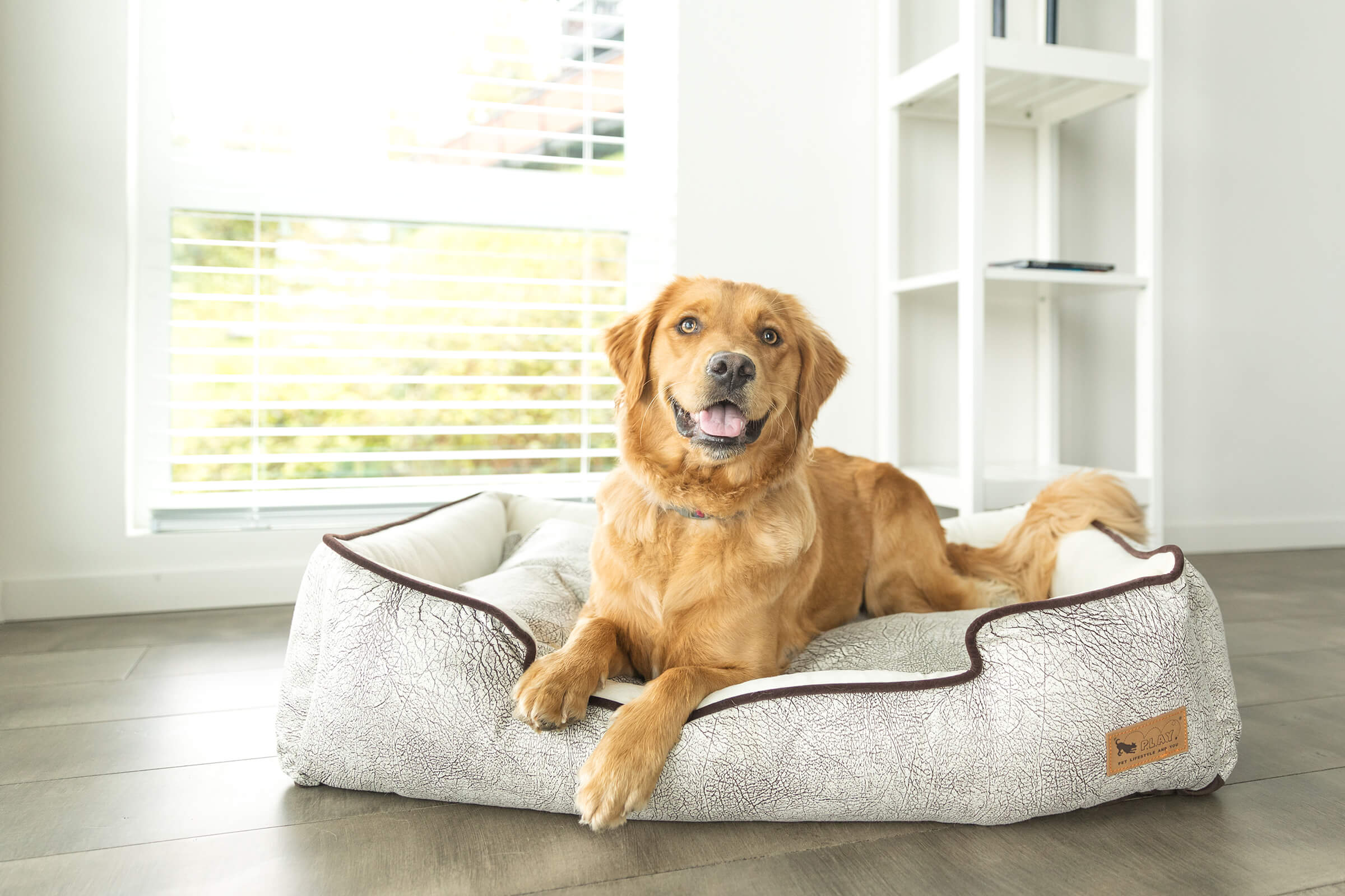 commercial pet bed photographer