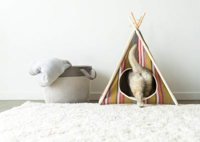 PLAY-pet-tent-photographer