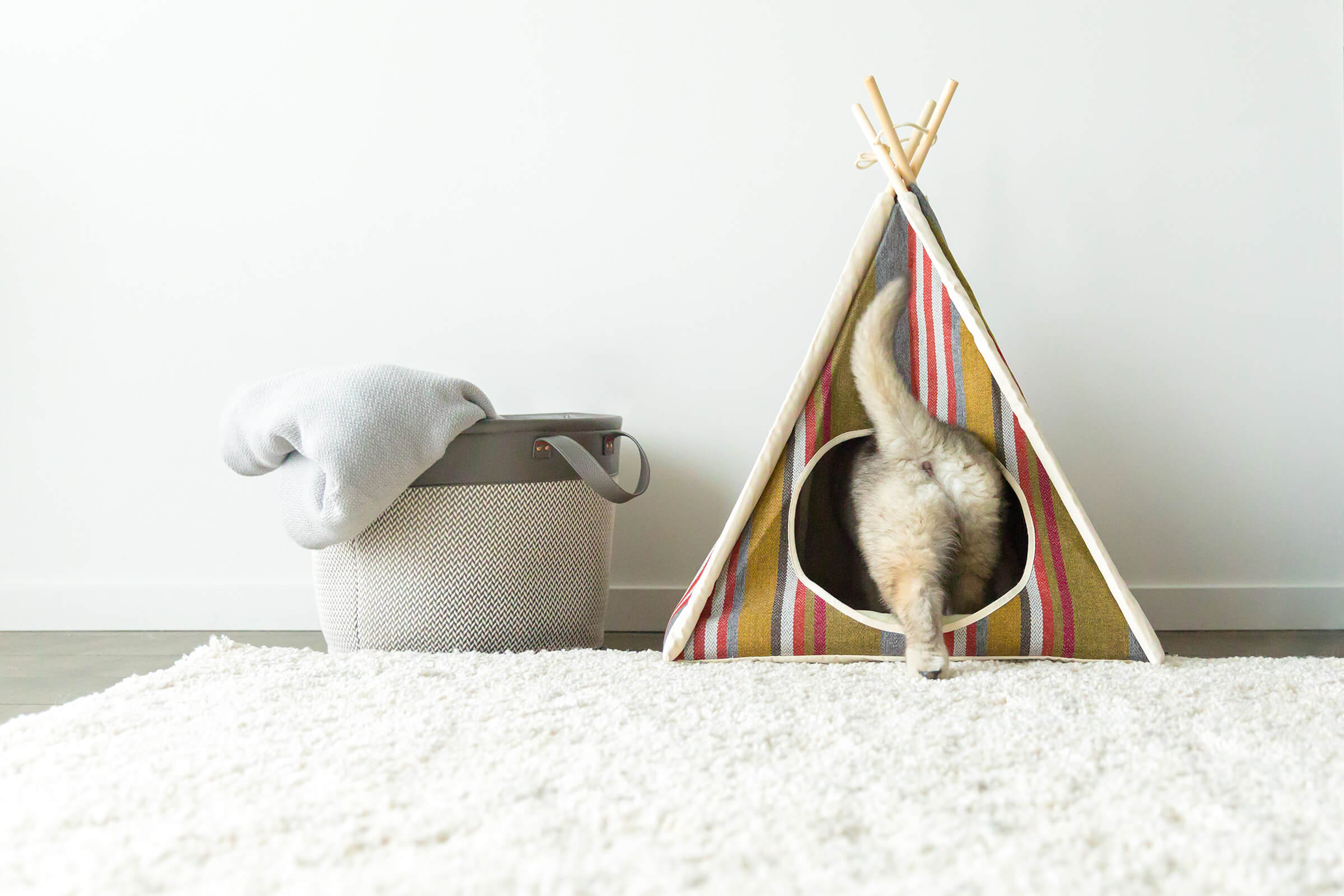commercial dog tent photographer