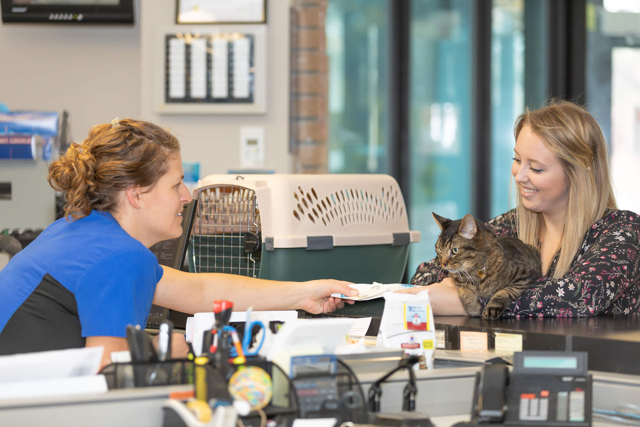 completing paperwork for cat adoption