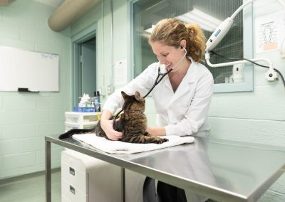 commercial-veterinary-photographer