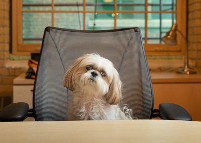 corporate-dog-portraits-toronto