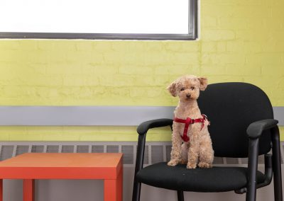 dog-at-work-toronto