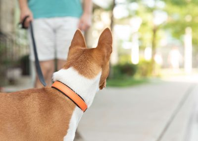 dog-collar-leash-commercial-photography