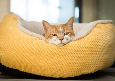 pet-bed-product-photographer