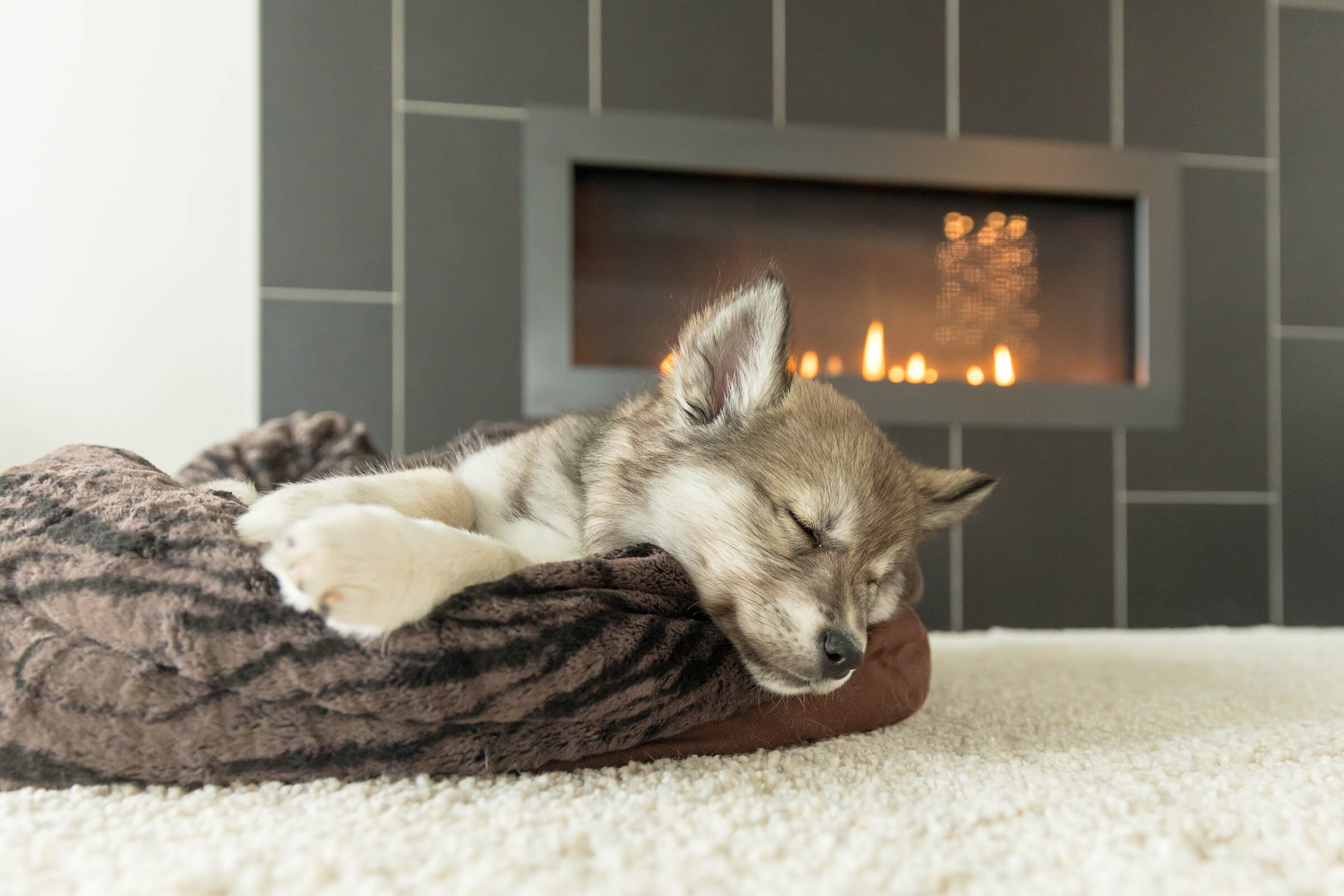 PLAY dog bed photographer