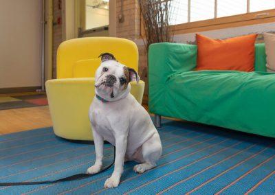 toronto-commercial-dog-photographer