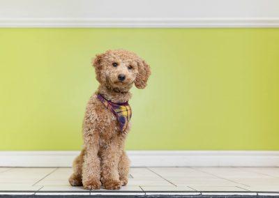 toronto-office-dog-photographer