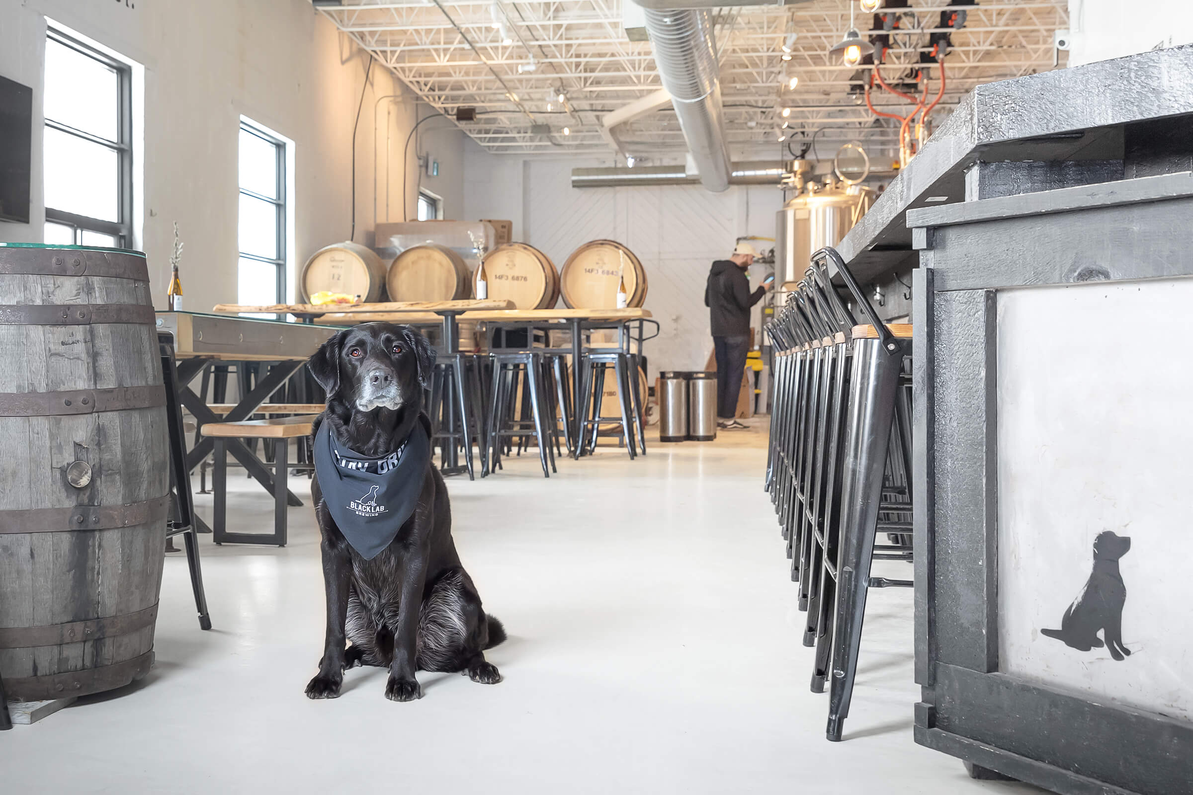 brewery interior of dog-friendly tap room