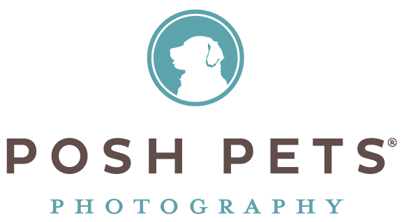 Karen Weiler Toronto's best pet photographer