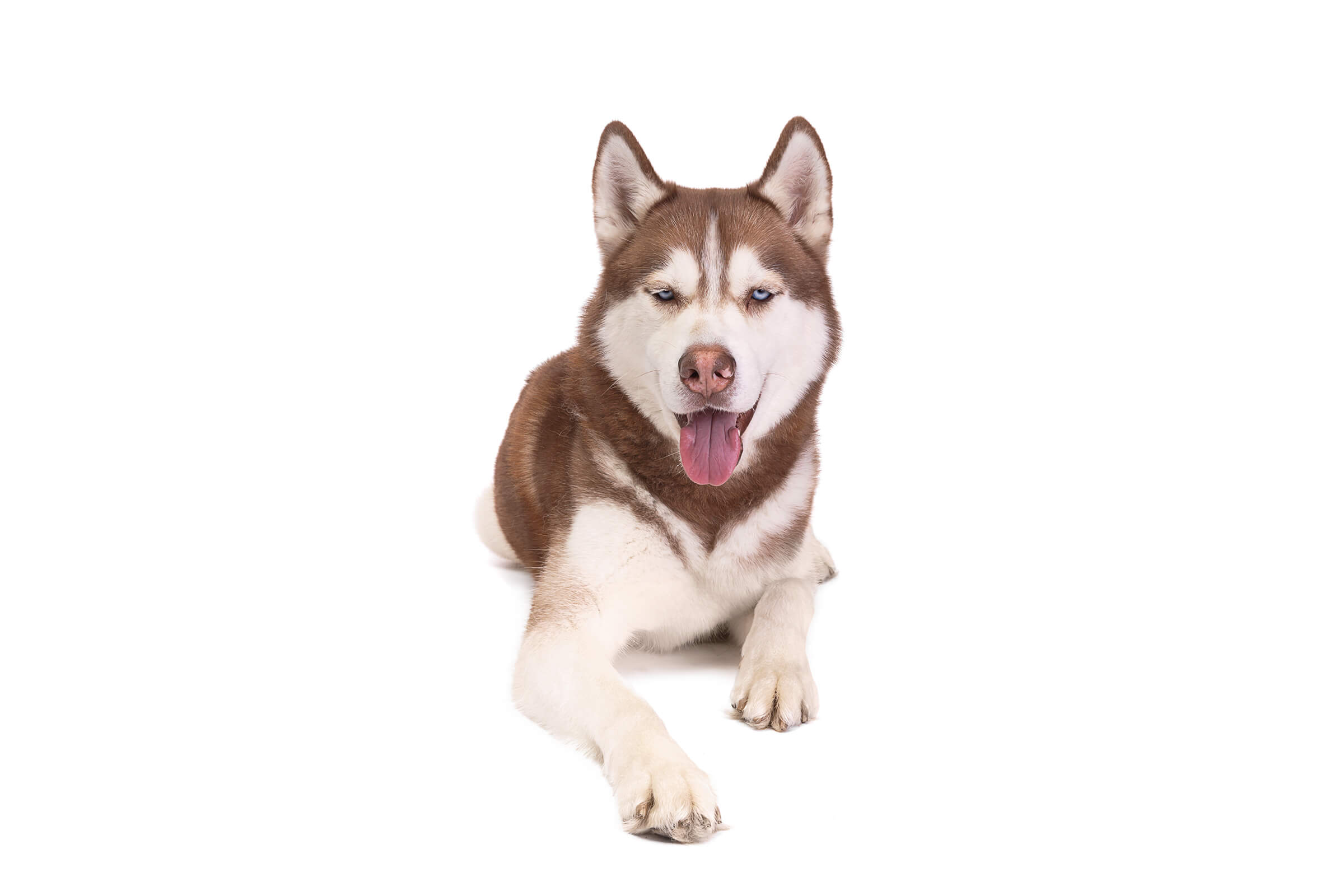 dog photography for pet food