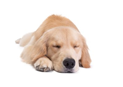 sleeping dog in commercial photography shoot
