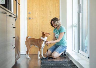 dog walker putting on dog leash