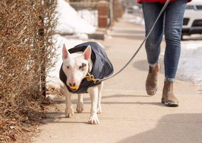 dog walking with best walker