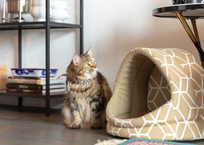 toronto-cat-sitter-photography