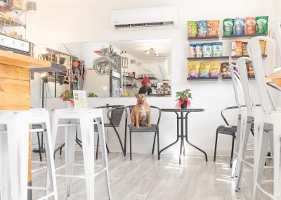 Karen-Weiler-Photo-Dog-Cafe-Toronto