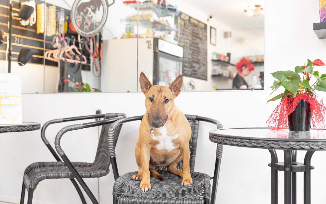 Dogs & Coffee
