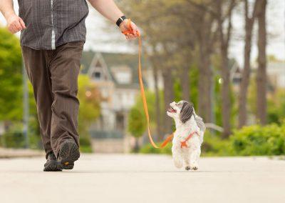 Toronto-dog-product-photographer