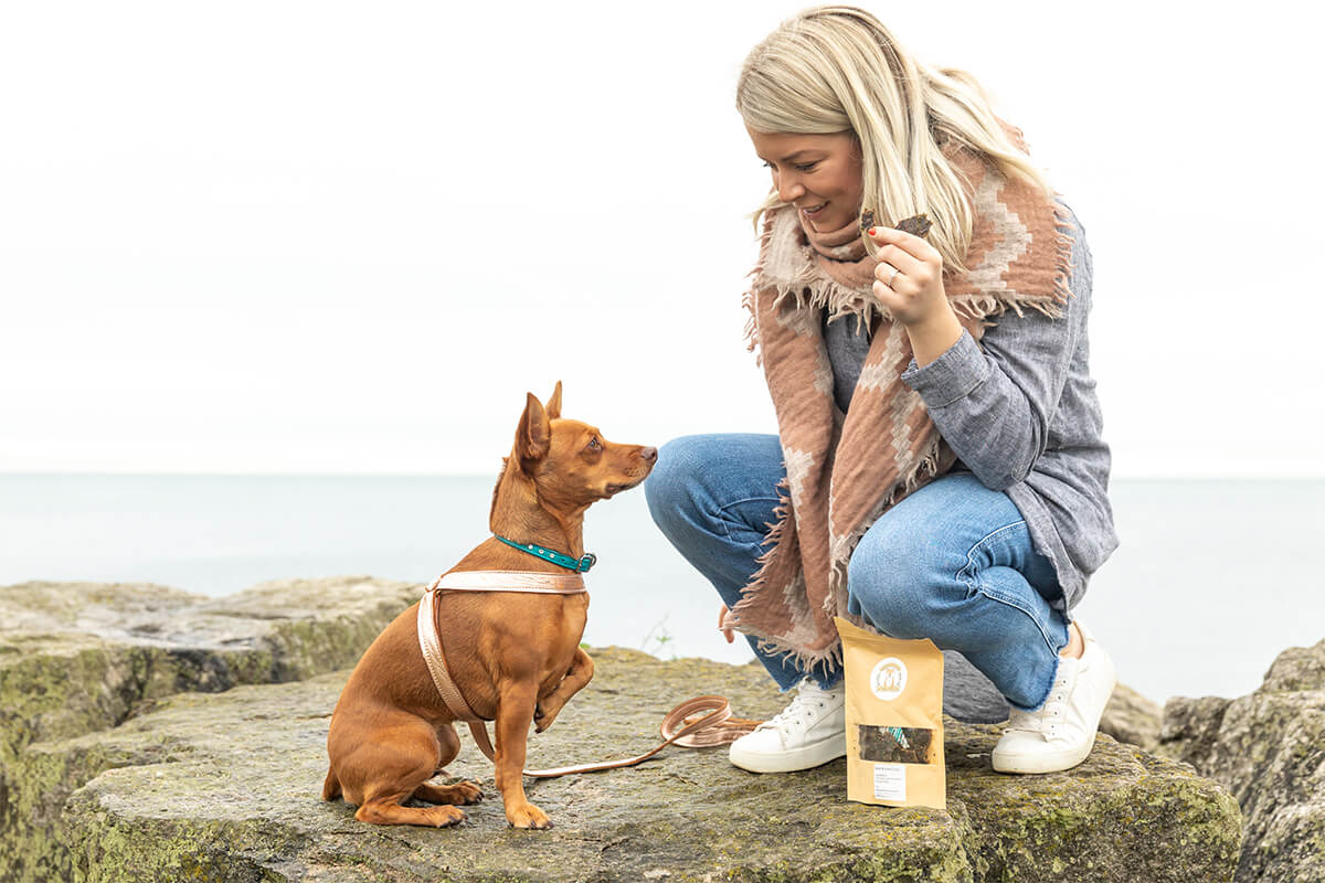 dog waiting patiently for treat on commercial photography