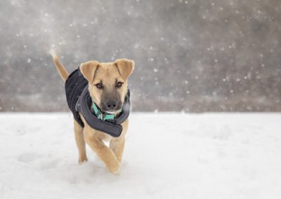 winter jacket on dog commercial photography