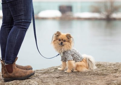 UPZ sweater on dog during commercial shoot