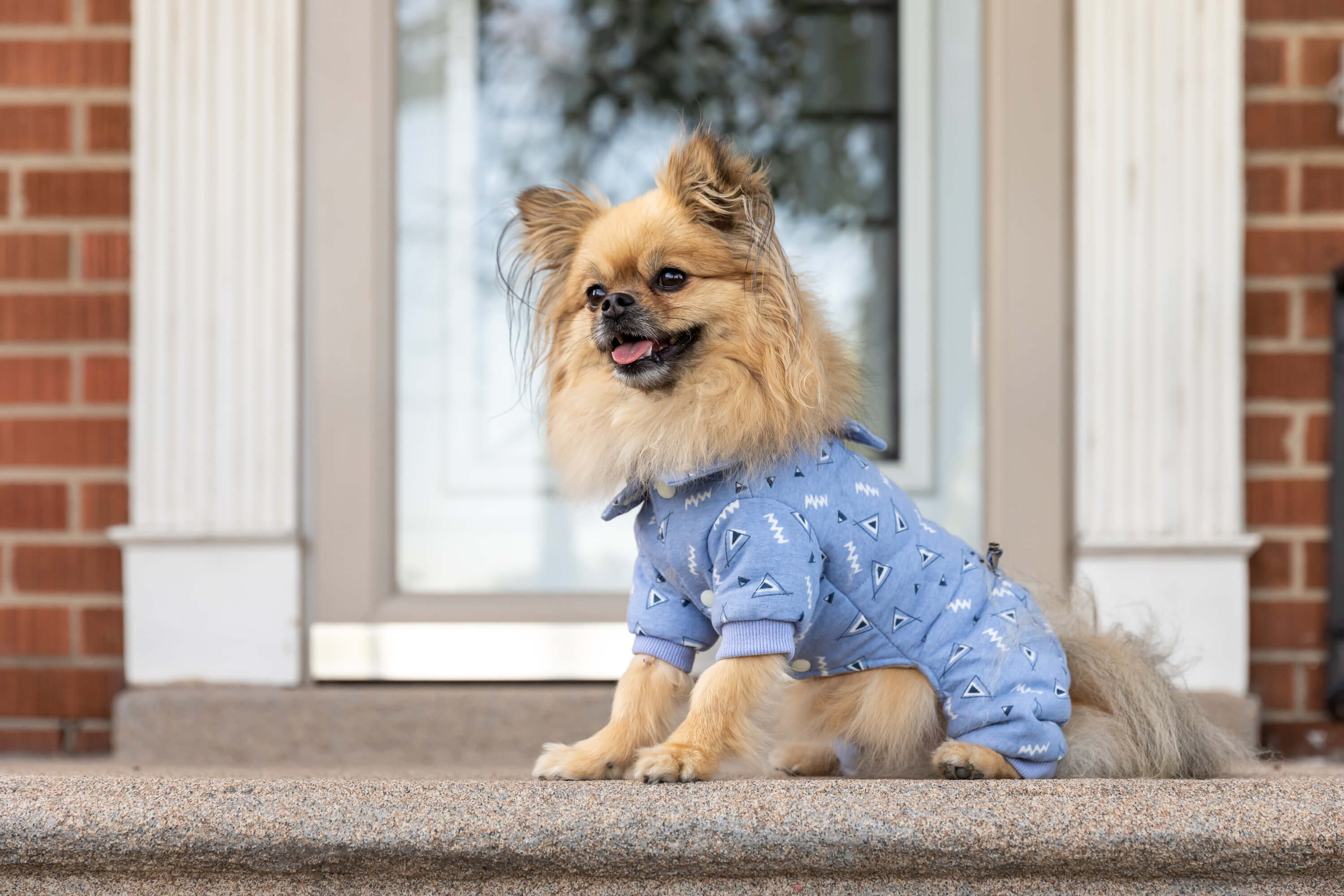 dog smiling on front porch for dog fashion company