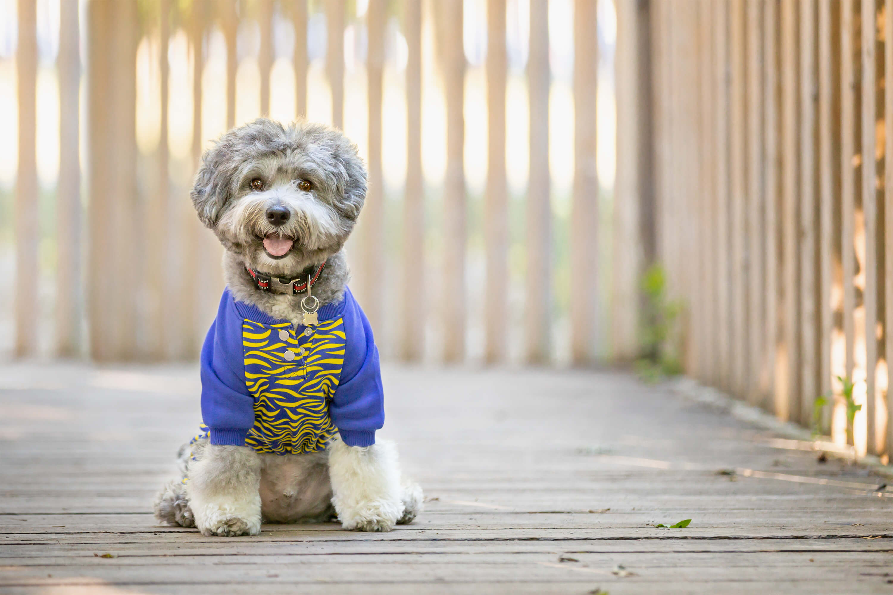 dog on bridge in pjs for dog accessories shoot