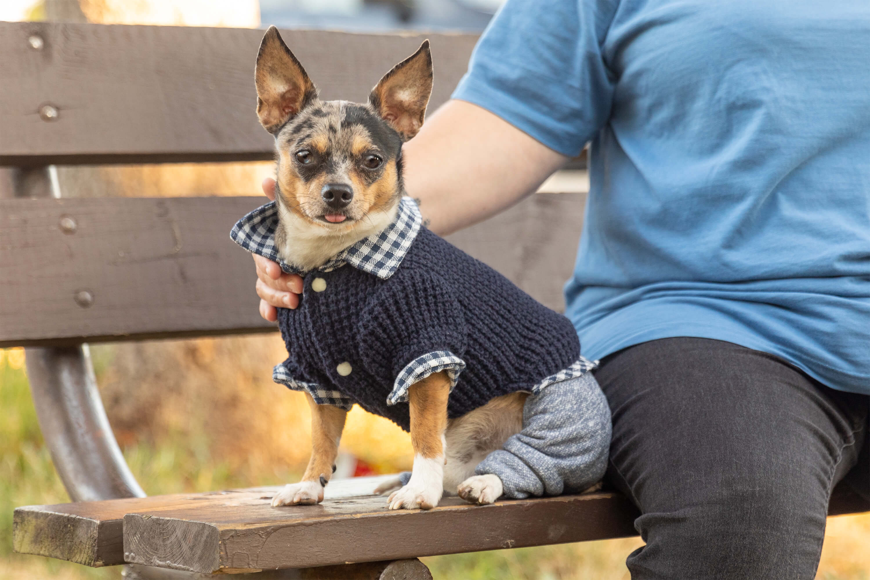 dog sitting on bench with sweater for commercial photo shoot