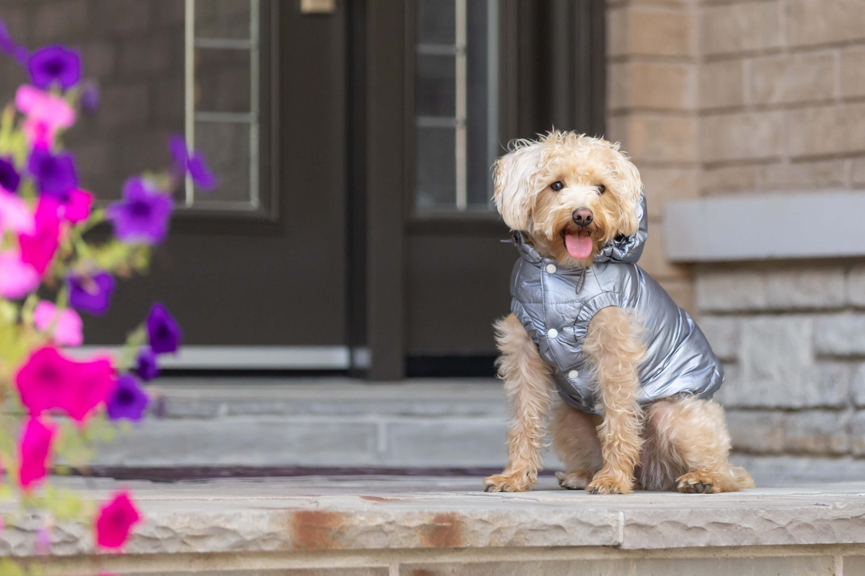 dog on front step in snowsuit for commercial shoot