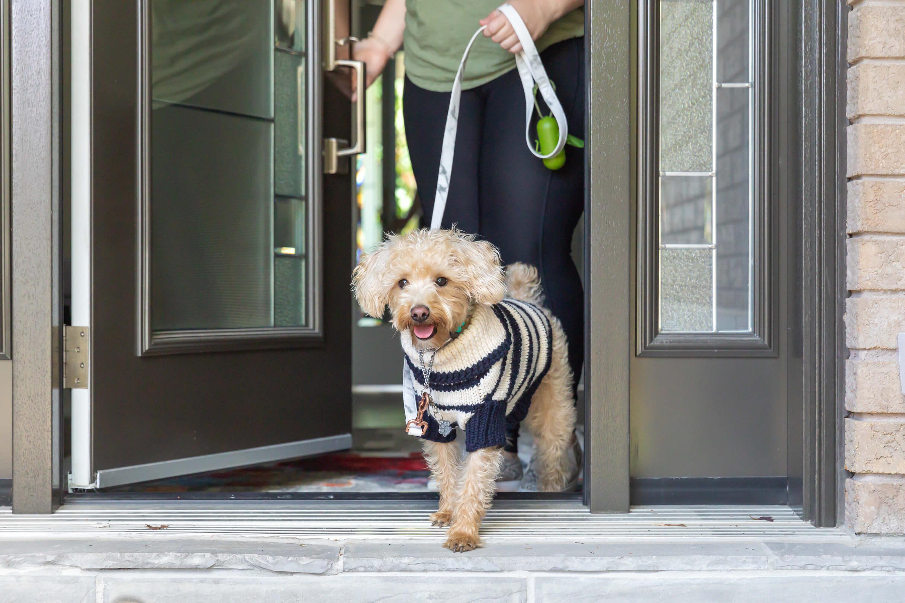 dog in sweater going leaving house for commercial shoot