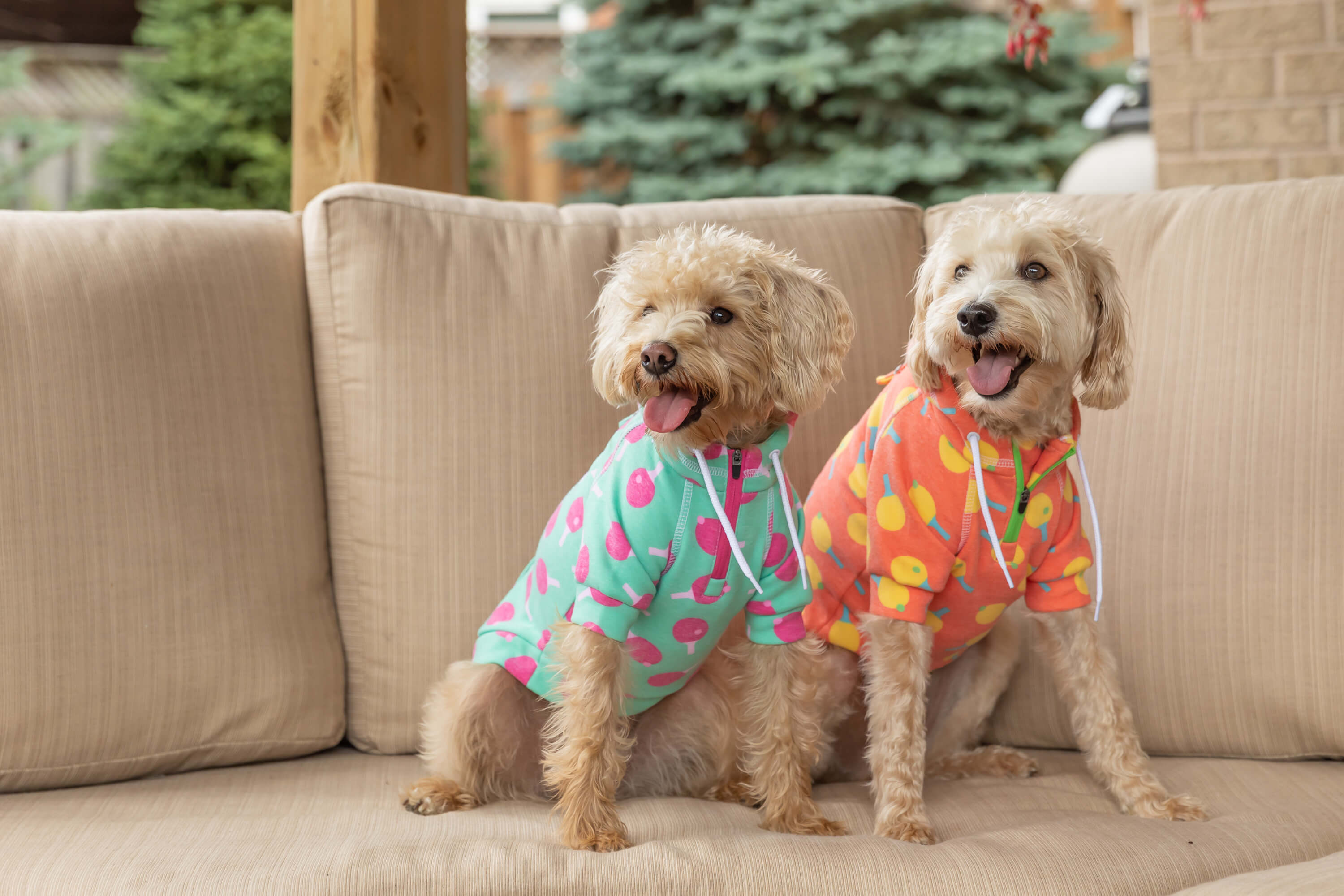 2 dogs in pjs on couch for commercial shoot