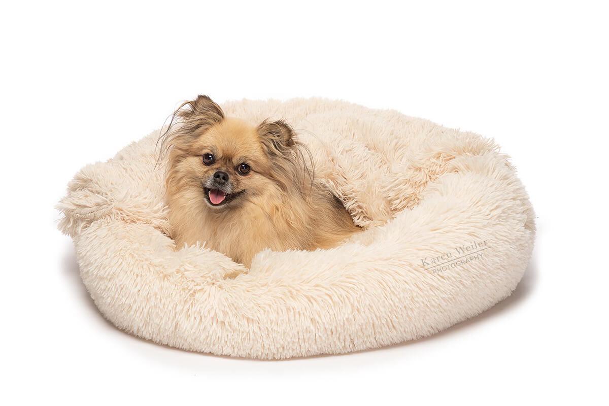 dog smiling in pet bed photography