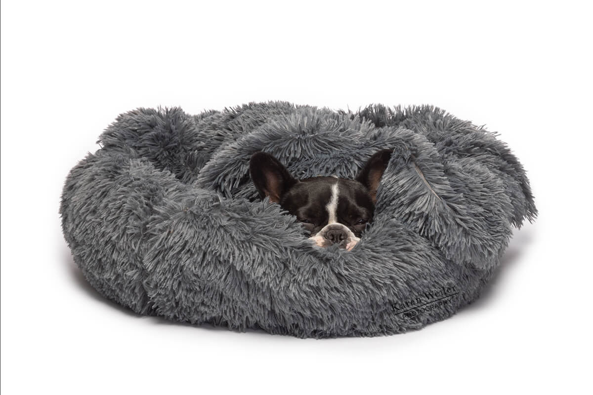 sleeping dog in pet bed commercial shoot