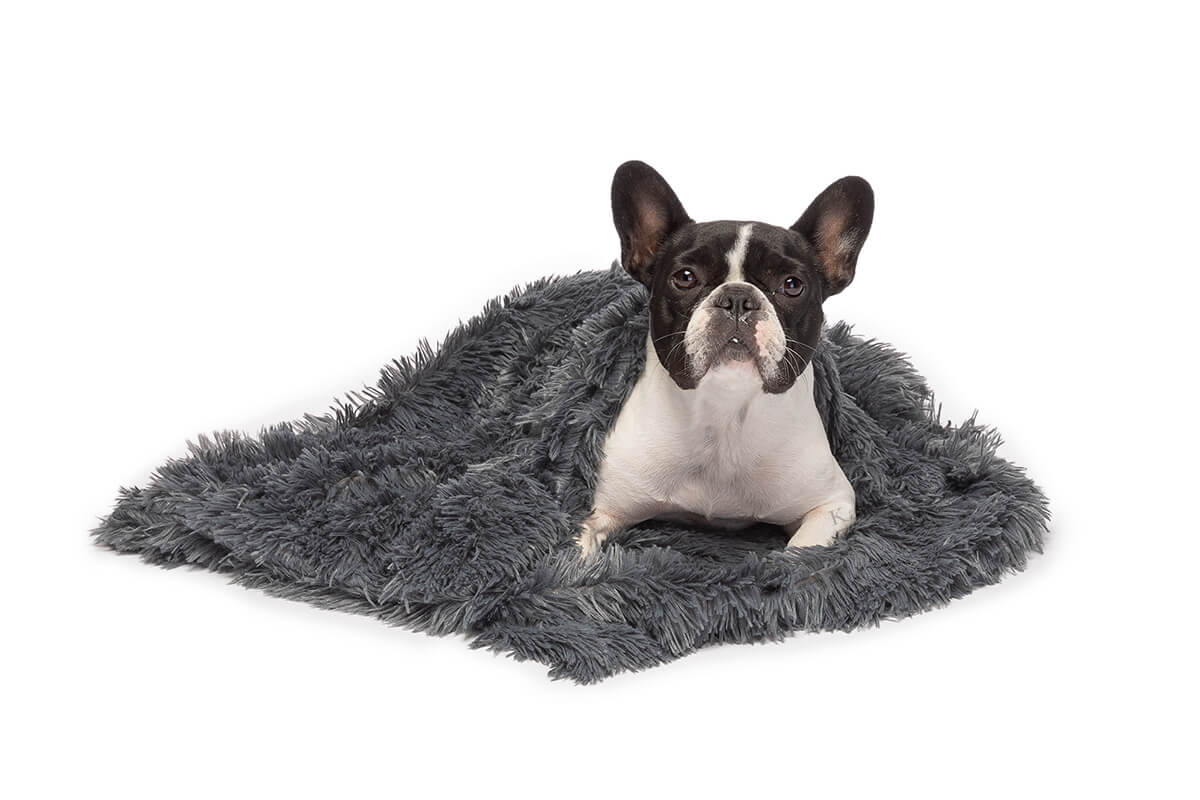 commercial frenchie dog shoot with pet blanket