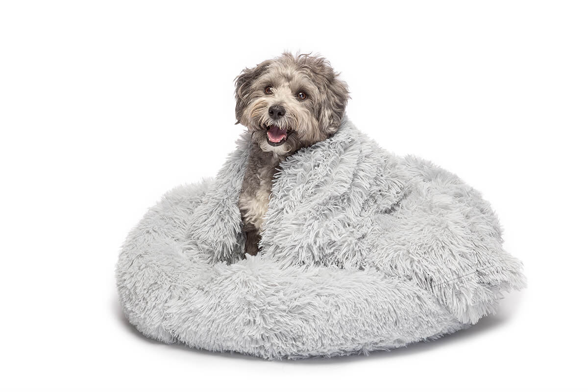 dog wrapped in blanket