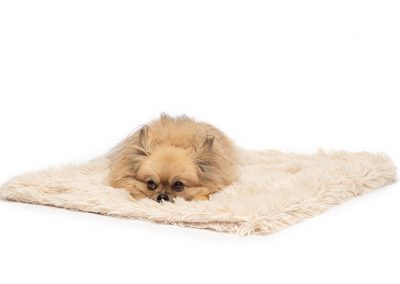 dog lying on blanket